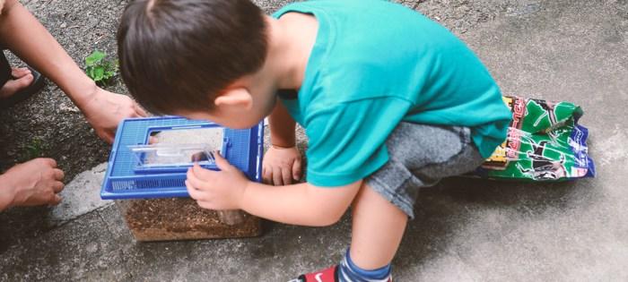 かぶとむしが幼虫から成虫になりました。3歳の息子、初めての飼育