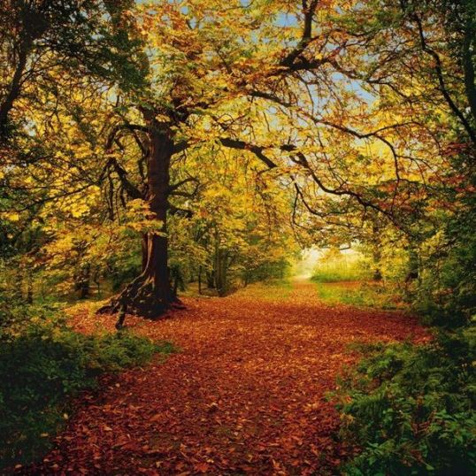 8 068 Autumn Forest hd - FOTOMURAL KOMAR AUTUMN FOREST RF. 8-068