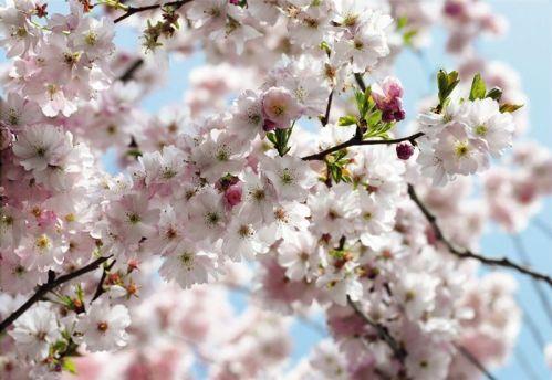 8 507 Spring1 - FOTOMURAL KOMAR SPRING RF. 8-507