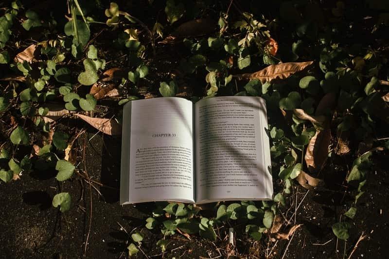 Poemas de Liuca