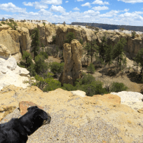 Maya checks out the box canyon that is on the other side of the cliff. I was praying she didn't see any rabbits!