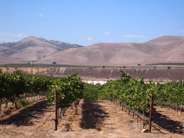 Vineyard in Santa Barbara