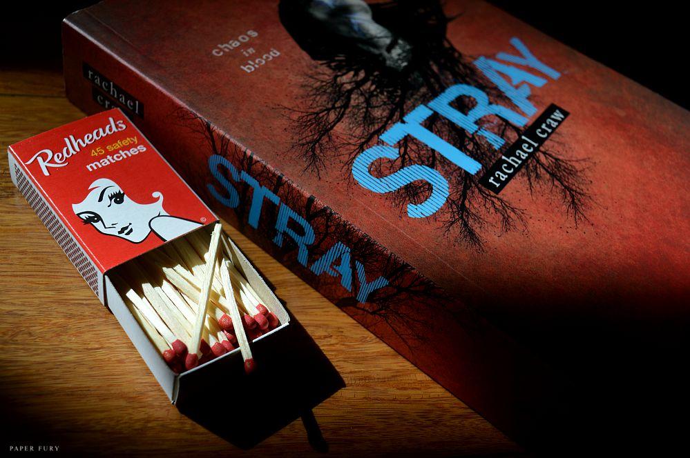 stray (2)