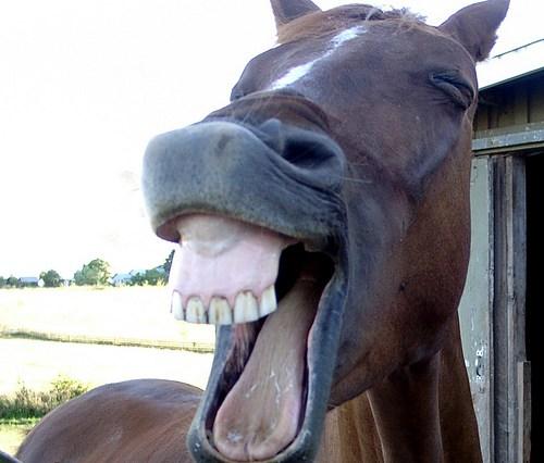 horse-laugh