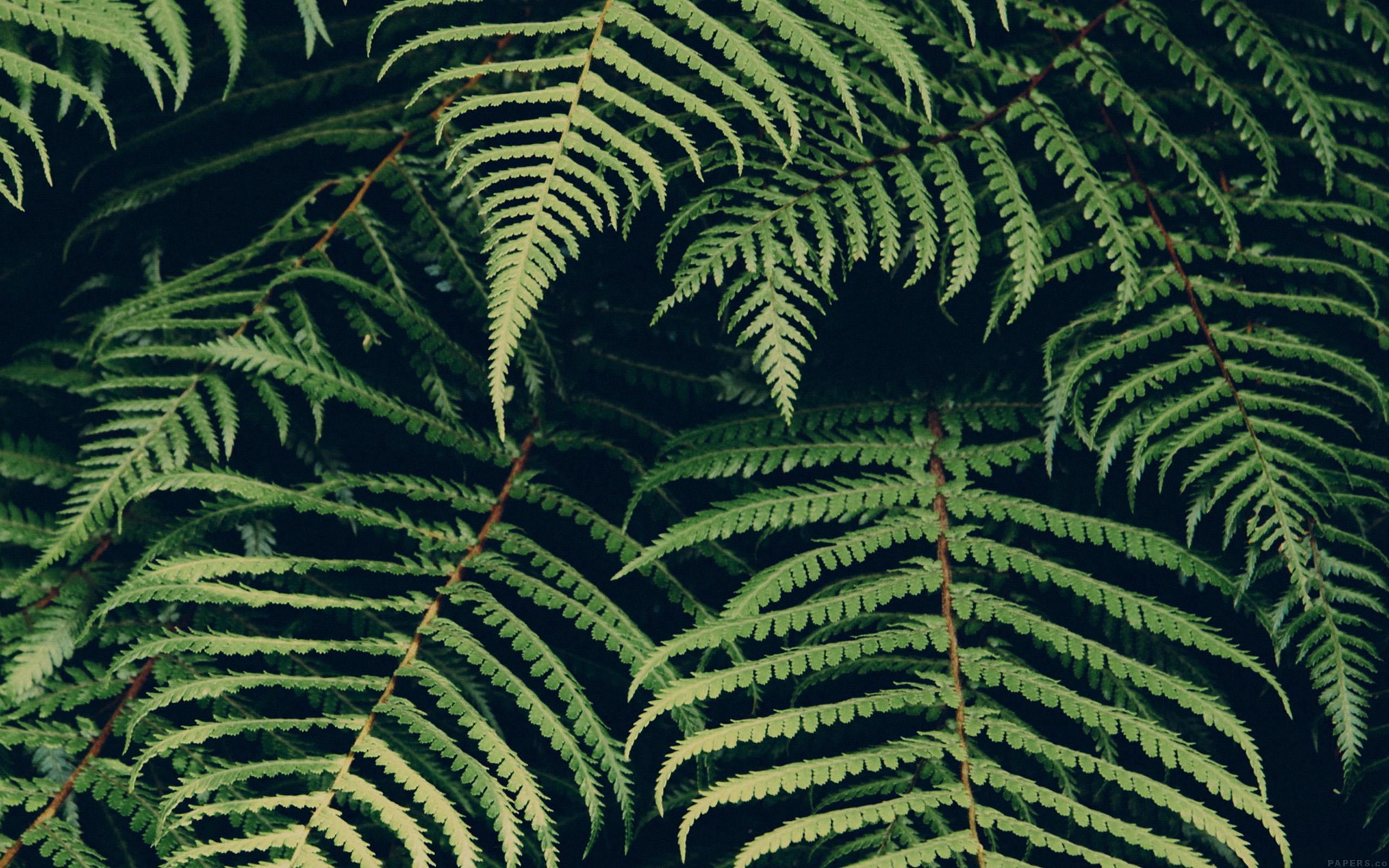 Bet you wish you had 18 phones now. mn06-leaf-green-dark-nature-jan-erik-waider-wallpaper