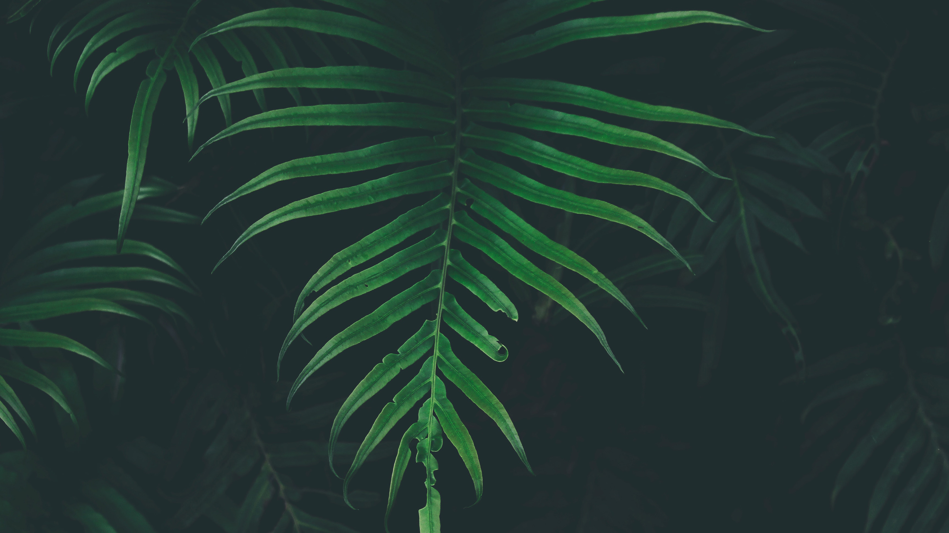 But setting any old live photo isn't going to give you great results: nw44-leaf-tree-dark-nature-wallpaper