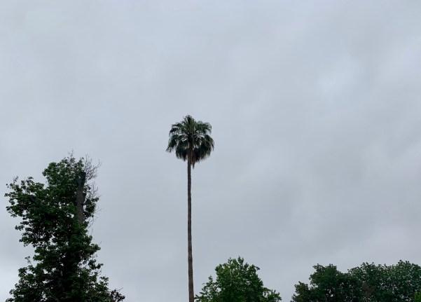 May Gray in LA