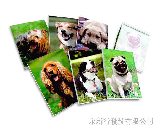 動物便條系列狗便條紙-M-14421便條紙,,0