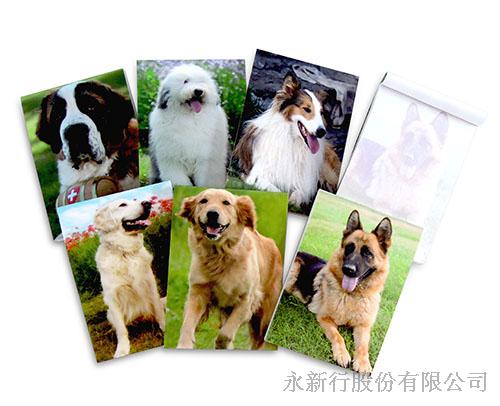 動物便條系列狗-M-14437狗便條紙