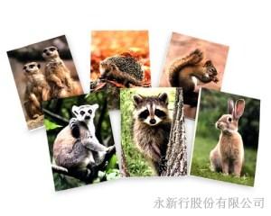 動物便條系列Wildlife-動物便條紙M-14450,2