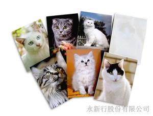 動物便條系列貓-貓便條紙_M-14439,2