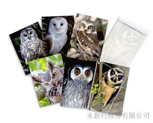 動物便條系列貓頭鷹便條紙-動物便條紙M-14434,2