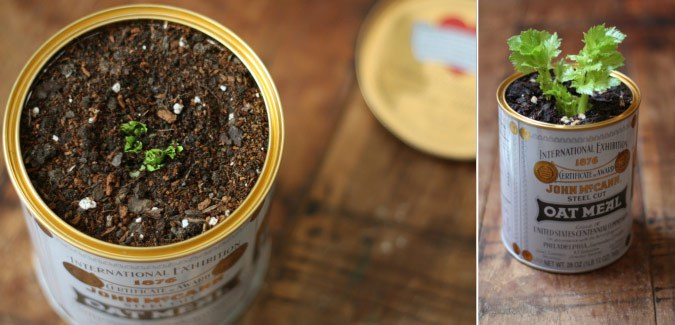 10 Vegetables you can Regrow on your Classroom Windowsill