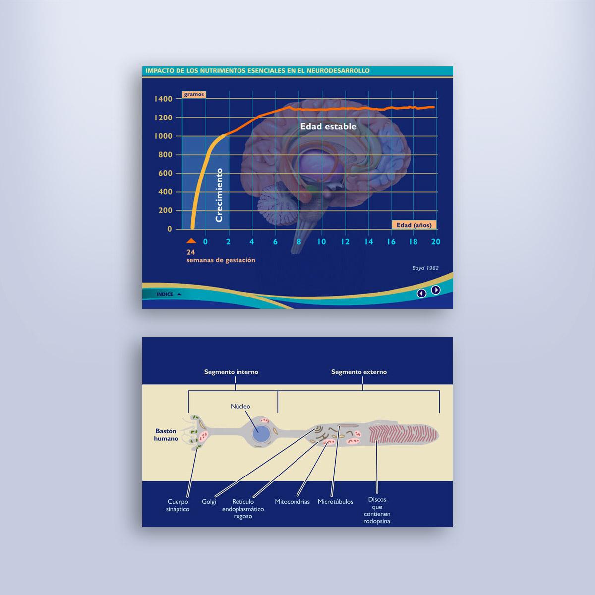 multimedia para consulta MJN
