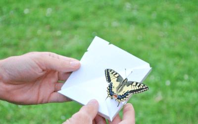 Envolées Individuelles de Papillons