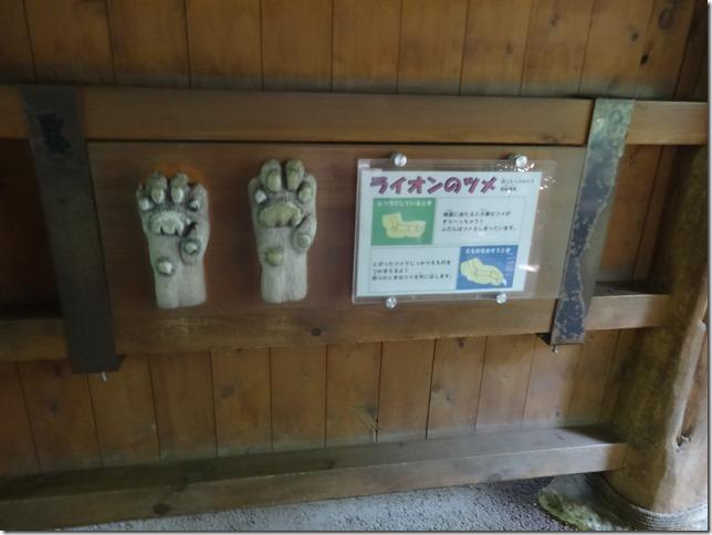 ズーラシアライオンの爪