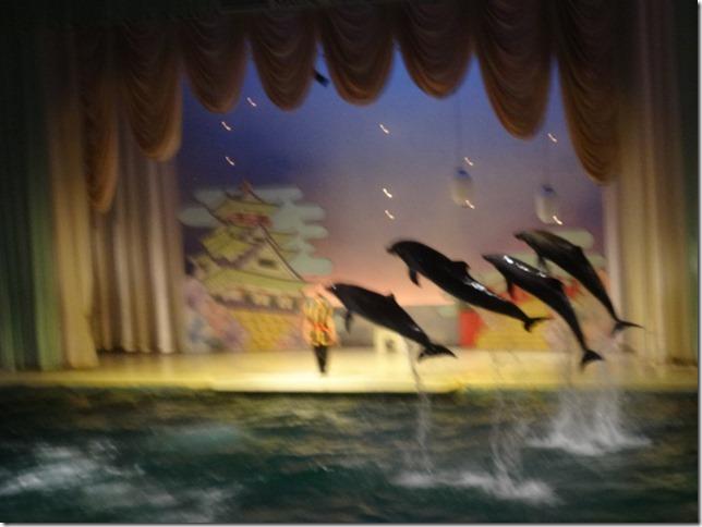 イルカ部隊のジャンプ