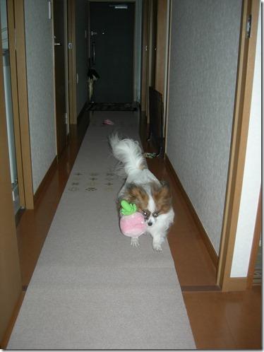 廊下を全力疾走するアリア