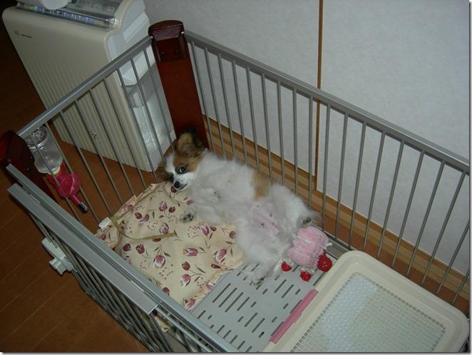 仰向けに寝る小さい頃のアリアと加湿空気清浄機