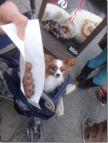 愛犬パピヨンのアリアをペット用カートに乗せて食べ歩き