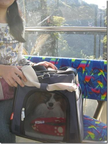愛犬パピヨンのアリアがキャリーバッグに入ってゴンドラに乗る