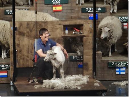 ペット(犬)と遊べる千葉県のマザー牧場の羊の毛刈りショーで毛を刈られた羊