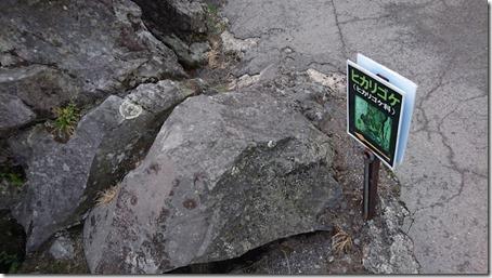 北軽井沢でペットと観光できる鬼押出し園遊歩道に自生するヒカリゴケ表示