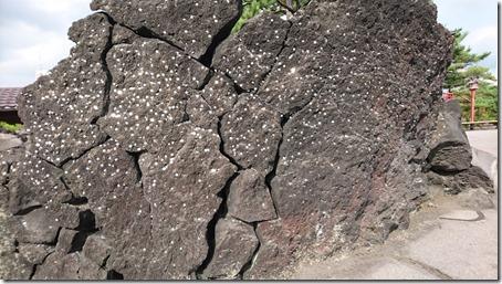 北軽井沢でペットと観光できる鬼押出し園遊歩道の硬貨がはまった溶岩