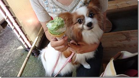 北軽井沢でペットと観光できる鬼押出し園遊歩道で食べたソフトクリーム