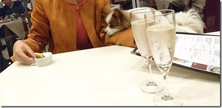 横浜駅東口にある横浜ベイクォーター内キンカウーカの席でクラッカーを見つめる愛犬パピヨンのアリア