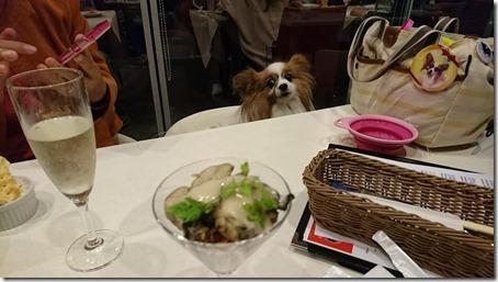 横浜駅東口にある横浜ベイクォーター内キンカウーカの牡蠣のマリネ牡蠣醤油のエスプーマと愛犬パピヨンのアリア