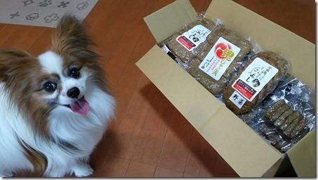 愛媛県宇和島のみよしのじゃこ天詰め合わせと我が家の愛犬パピヨンのアリア