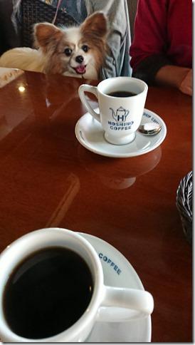 愛犬と入れる星乃珈琲店のコーヒーとパピヨンのアリア