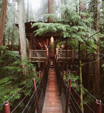 Awesome Treehouse Masters Design Ideas 5