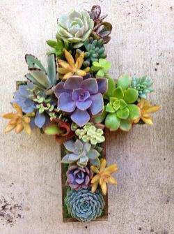 Stunning Diy Succulents For Indoor Decorations 12