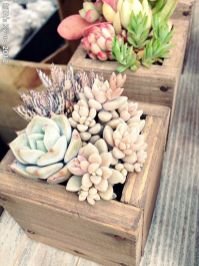 Stunning Diy Succulents For Indoor Decorations 19