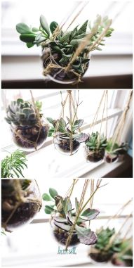 Stunning Diy Succulents For Indoor Decorations 40