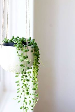 Best Indoor Plants Decor For Air Purify Apartment And Home 18