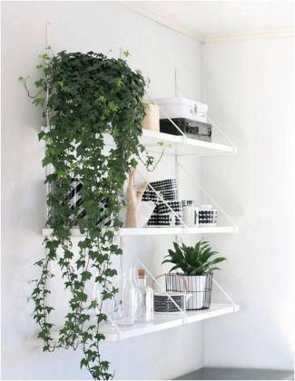 Best Indoor Plants Decor For Air Purify Apartment And Home 44