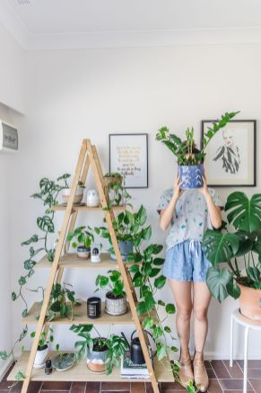 Best Indoor Plants Decor For Air Purify Apartment And Home 7