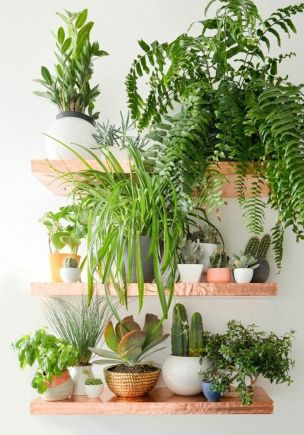 Best Indoor Plants Decor For Air Purify Apartment And Home 8