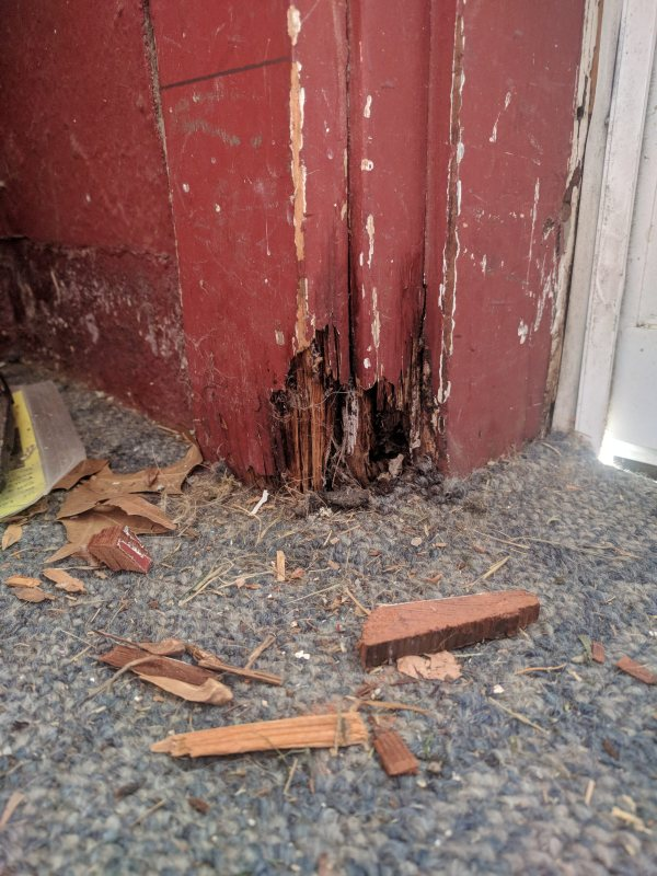 Door frame repair, grading | PA Pretty Great House