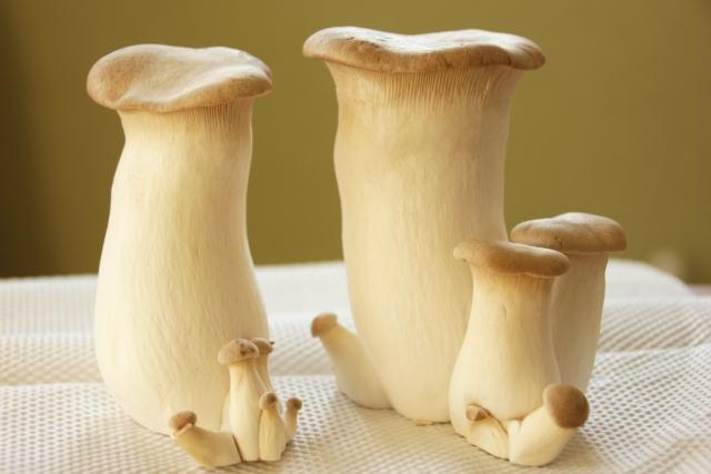 elingi-mushroom-diet1