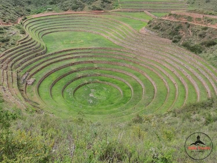 Green Moray Inca labaratory