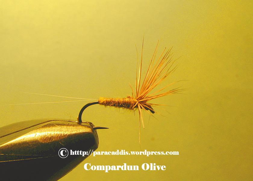 Olive Comparadun