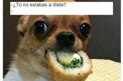 Memes chihuahua dieta