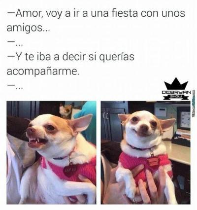 Memes de chihuahuas
