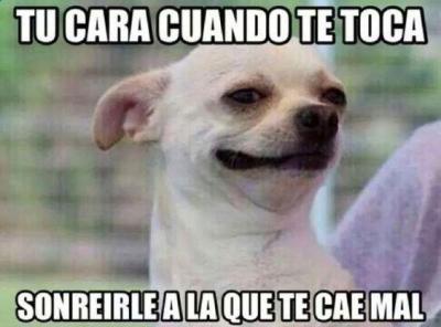 meme de chihuahuas 3