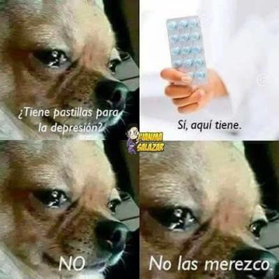 meme de chihuahuas 8