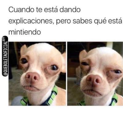 meme de chihuahuas 9